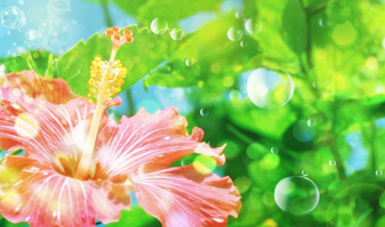 цветы, капли, красивые, теги, фоны, фотообои, винкс,