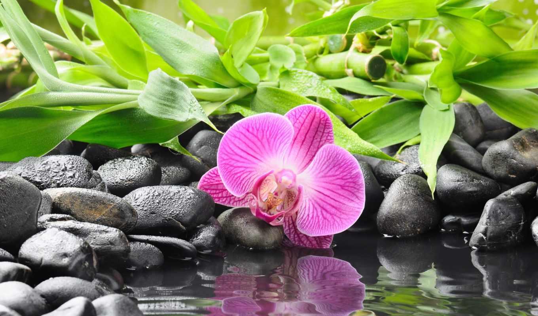 орхидея, скалы, цветы, черные, water, бамбук, орхидеи, разделе,