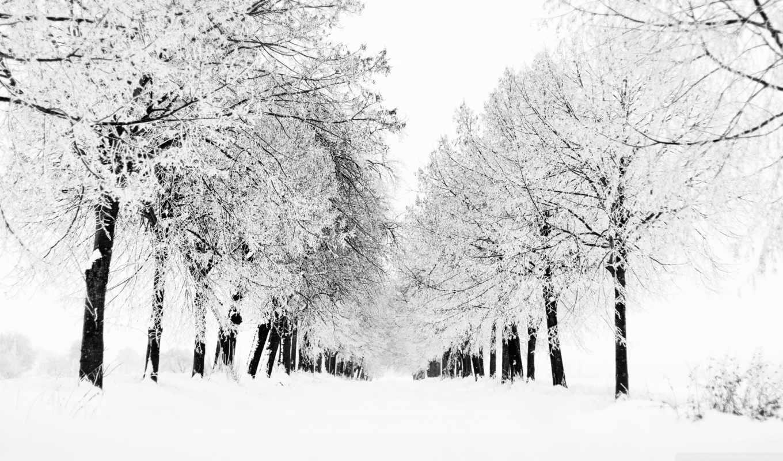 аллея, зимняя, картинка, рисунки, winter, рисунок, снег,