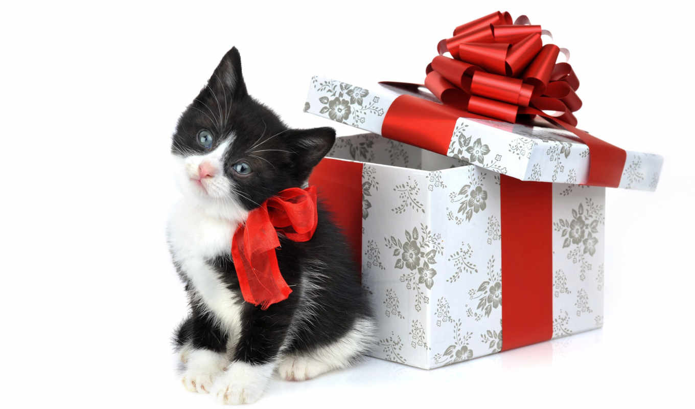 обои, подарок, котенок, котята, подарком, фото, ко
