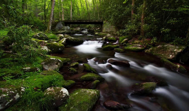 лес, река, мох, widescreen,