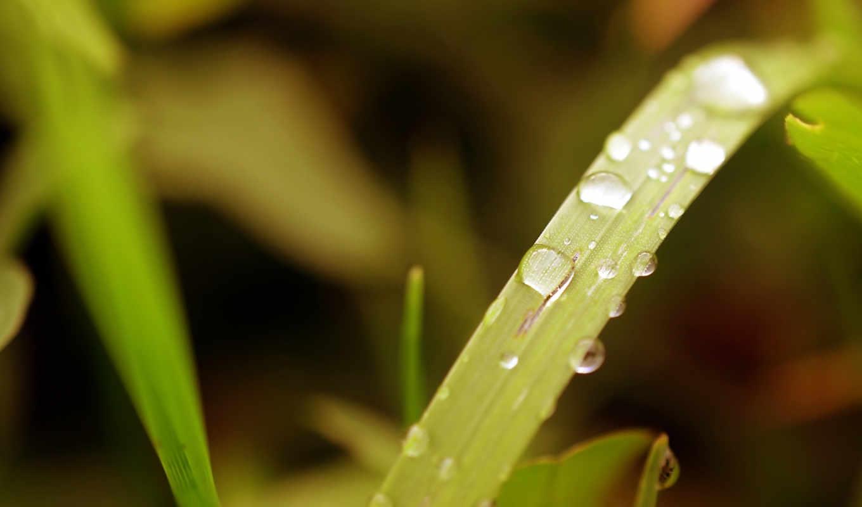 more, plants, desktop, free, природа, трава, amazing,