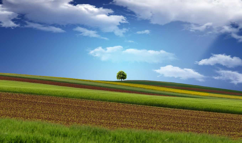 поле, дерево, небо, дек,