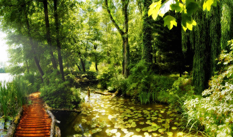 тропинка, лес, природа, лесная, пруд, сказ, лилии,