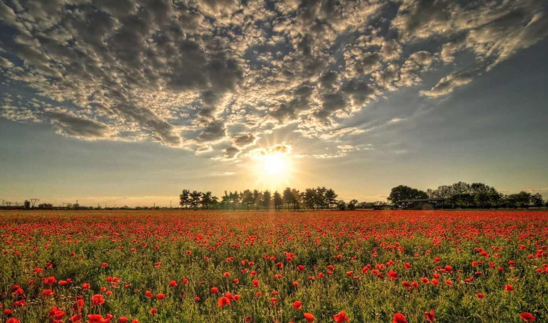 природа, цветы, поле, существительное, закат, море, облако, taiwan, испания