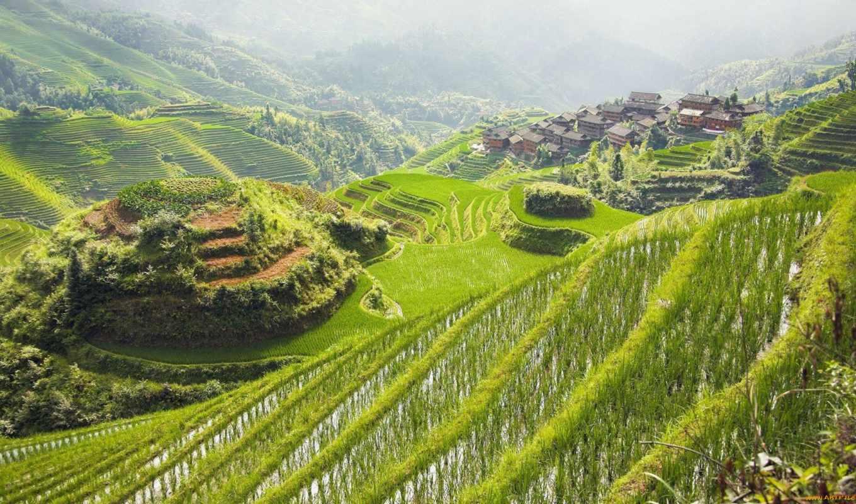 поля, горы, terraced, view, fotoğraf, природа,