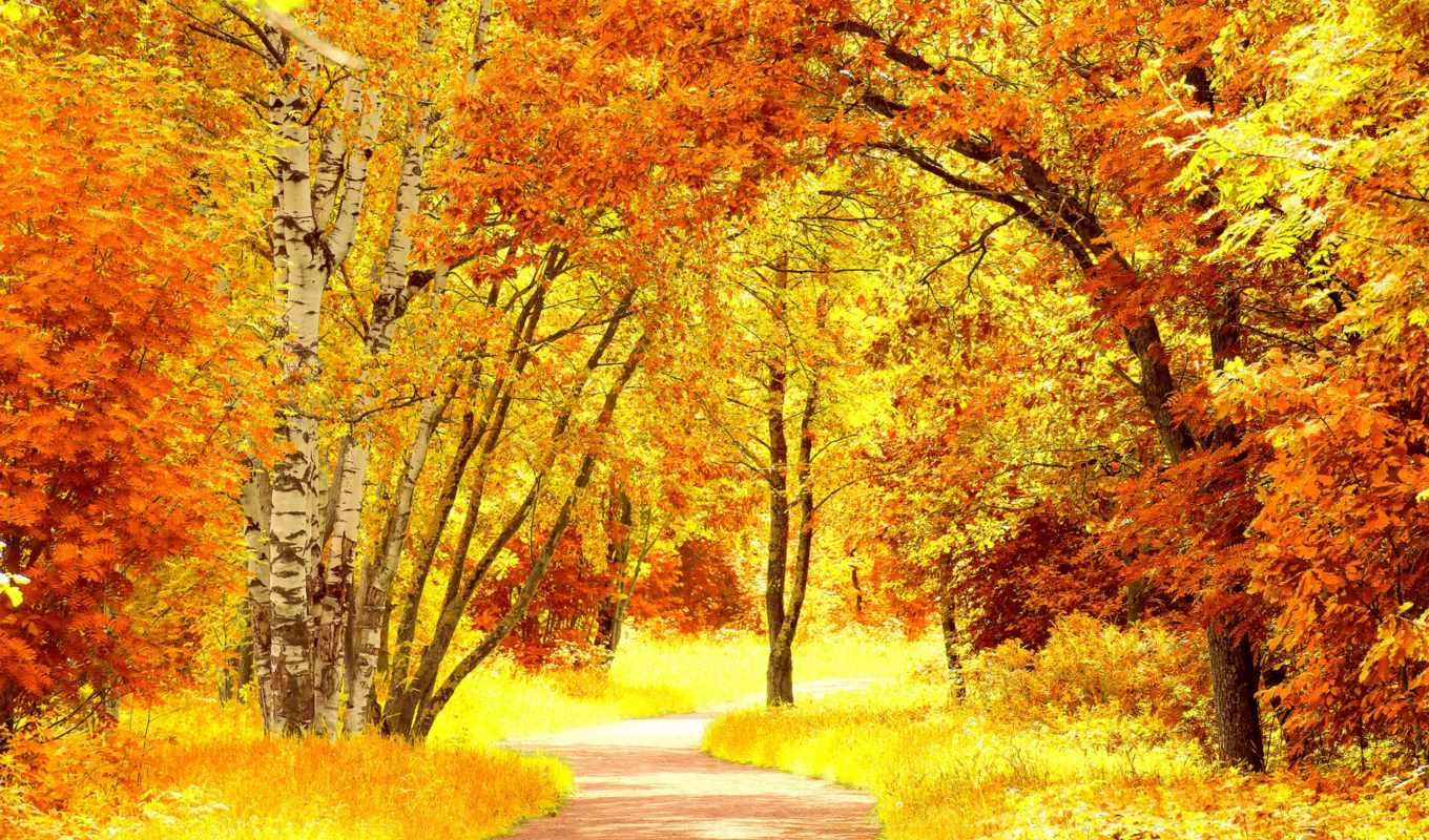 autumn, yellow, red, scenery, resolution, nature, download, fall,