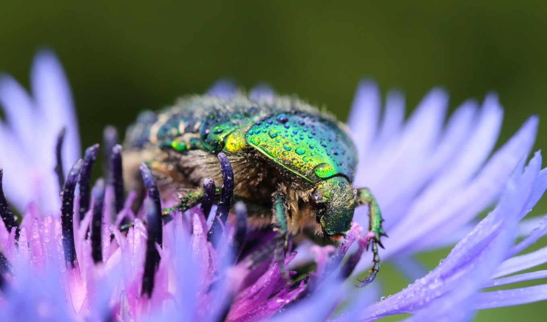 макро, жук, божья, фотографии, коровка, ящер, заставки, насекомое, бабочка,