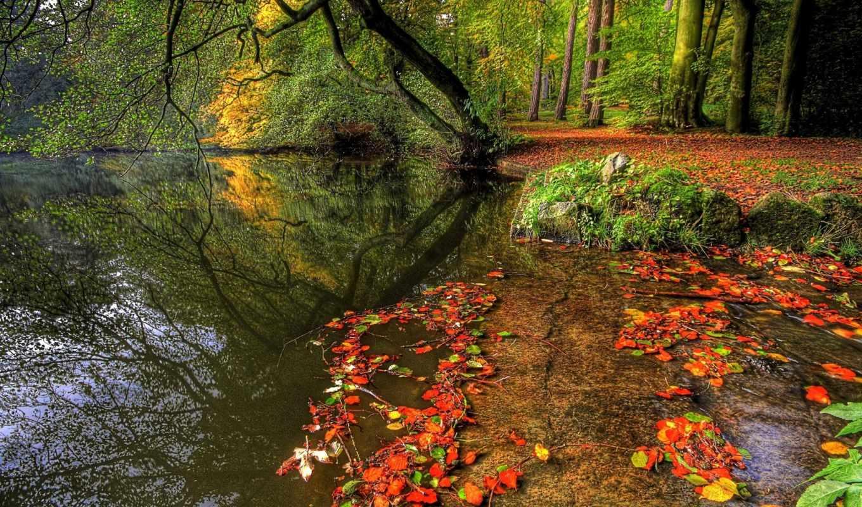 осень, красивые, заставки, фотографии, качественные, осени,