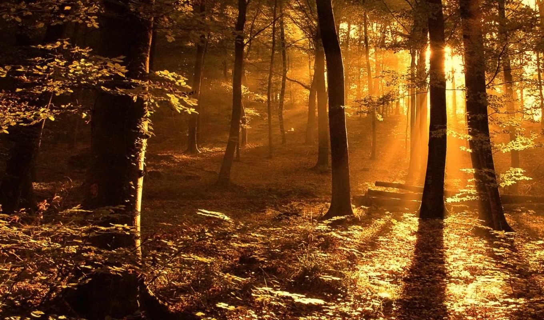 лес, high, ipad, desktop,