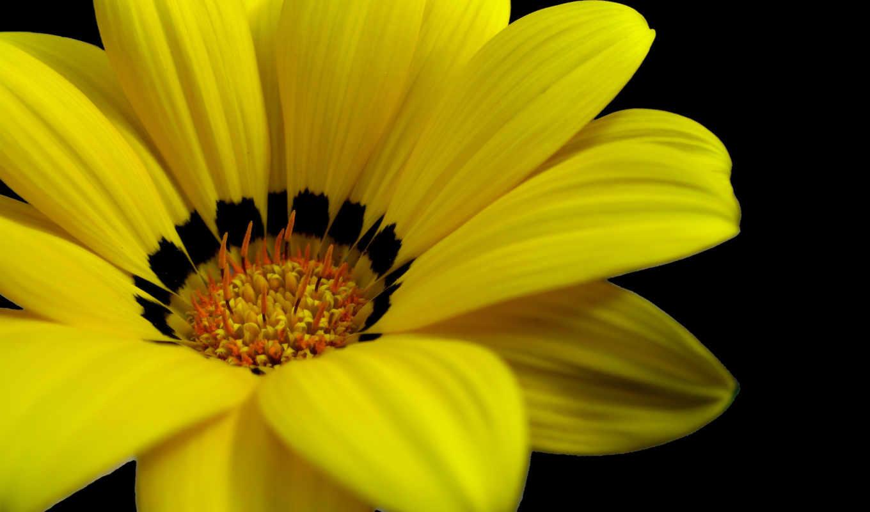 цветы, yellow, клипарт,