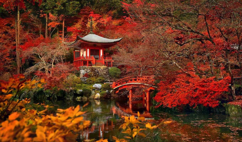 red, maple, japanese, pazlyi, япония, осень, park, доставка, rook