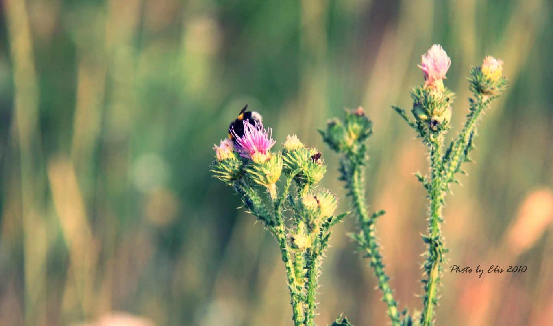 цветок, макро, шмель, лето,