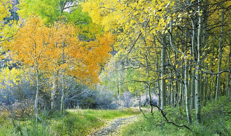 лес, природа, зелёный, вдохновляющие, aspen, часть, просмотров,