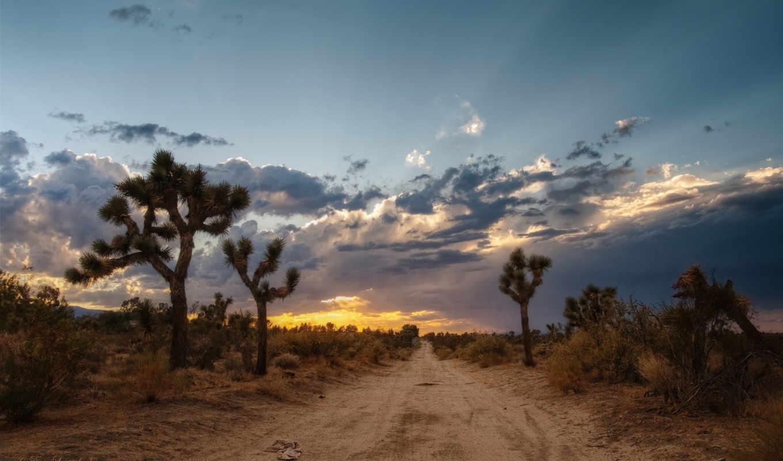 пустыня, мохаве, дорога, дерево, mojave, закат, usa, навин,