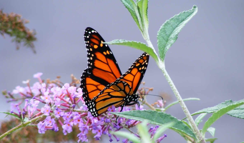 бабочки, бабочка, насекомые, часть, картинка, zhivotnye,