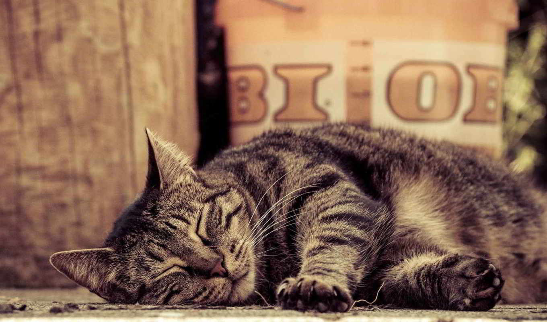 кот, tabby, striped, лежит,