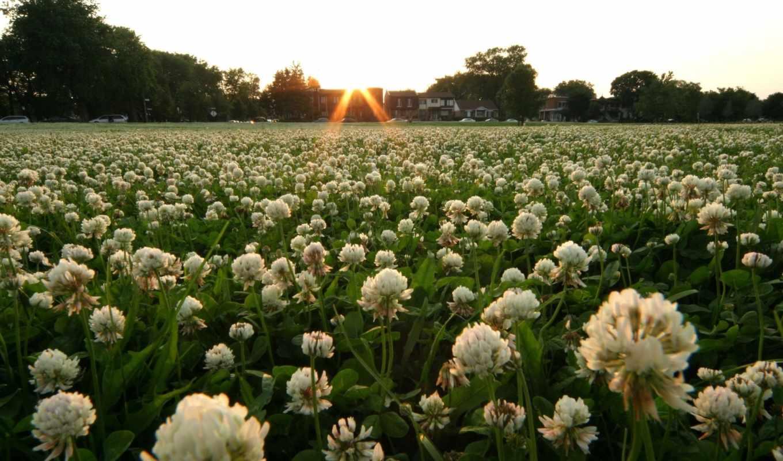 wildflowers, поле, поля, desktop, pinterest, pin,