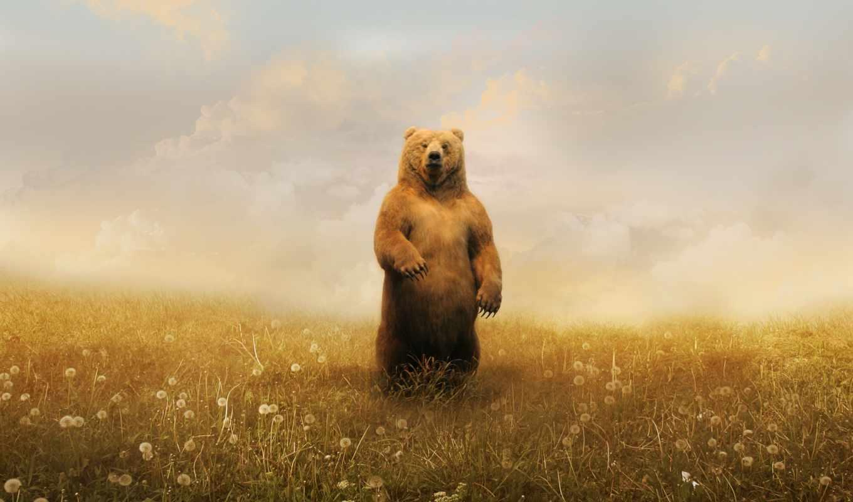 обои, медведь, одуванчики, облака, поле, рисунок,