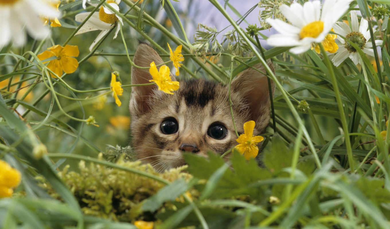 котёнок, траве,
