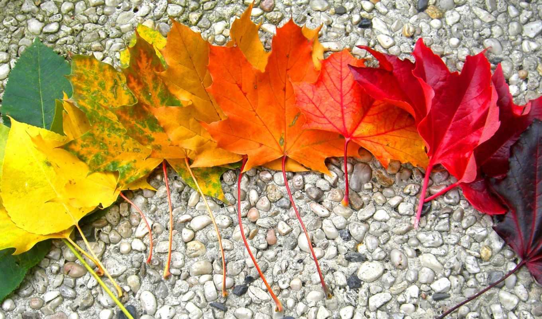 autumn, rainbow, lani, heartcore, pics,