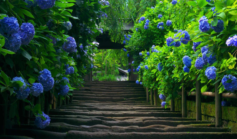 priroda, природы, лестница,