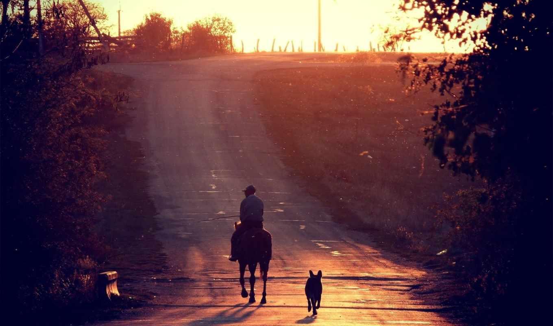 лошадь, собака, zakat, priroda, дорога, пейзаж, солнце,