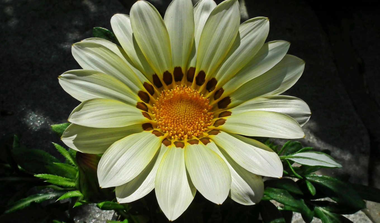 цветы, цветочная, красавица, восход, бутон,