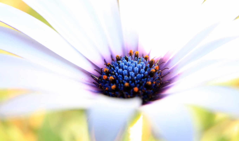 красивые, цветы, картинка, красивая, весна, красивый, white,