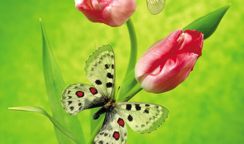 martha, весны, весна, тюльпаны, мар,