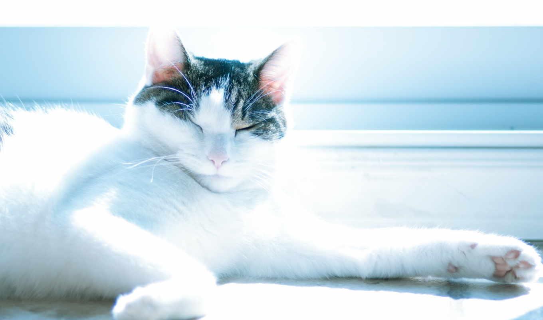 кот, relaxing, cats, you, photos, stock,
