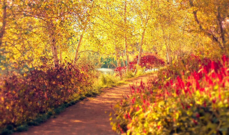 осень, парк, березы, деревья, кусты, дорожка, тропинка, картинка, природа, bộ, hinh, pathway, windows,