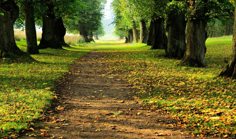 path, through, trees,