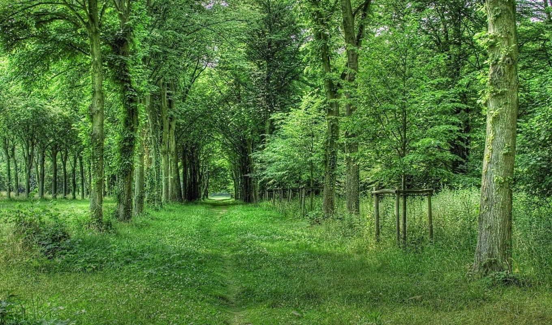 природа, summer, календарь, природы, летом,