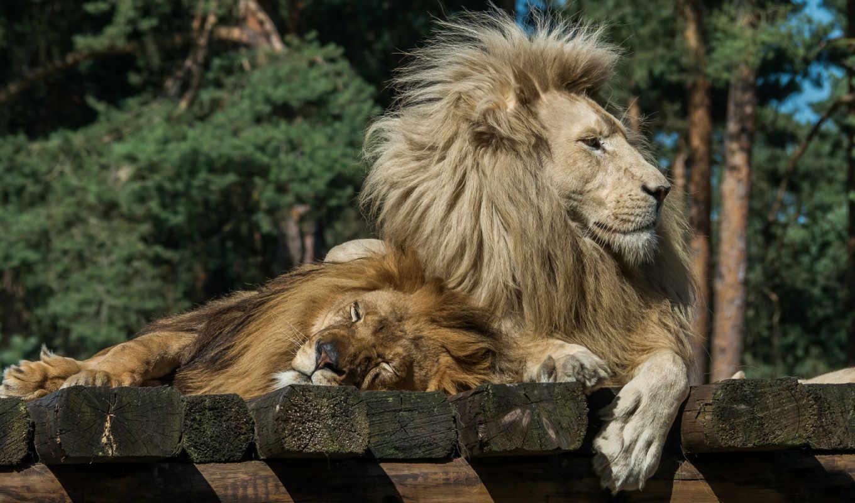 world, animal,
