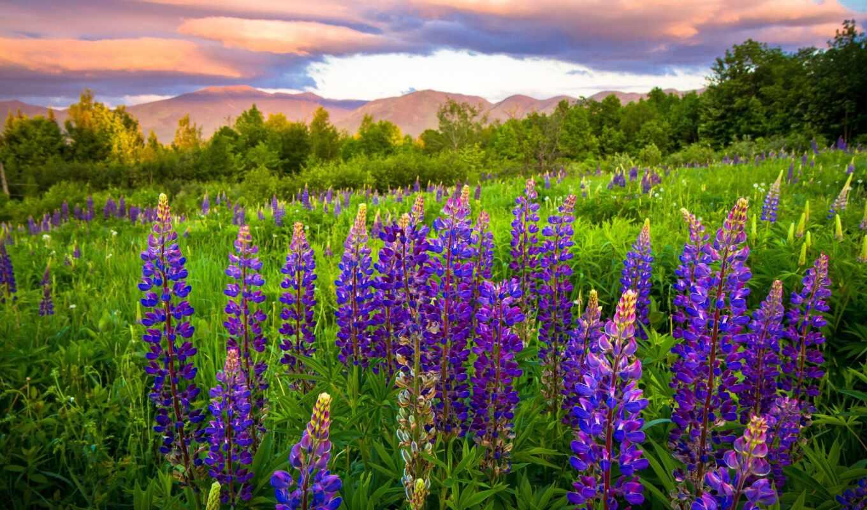 цветы луговые название и фото