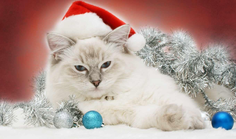быстро с новым годом котенок картинки сложно, тем более