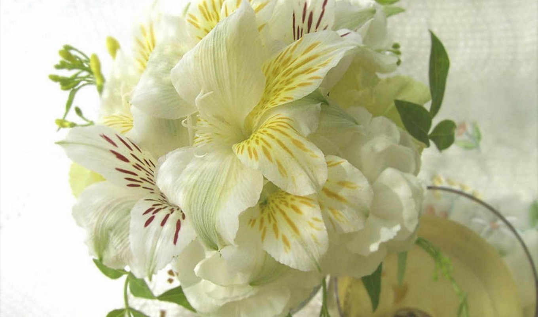 цветы, petunia,
