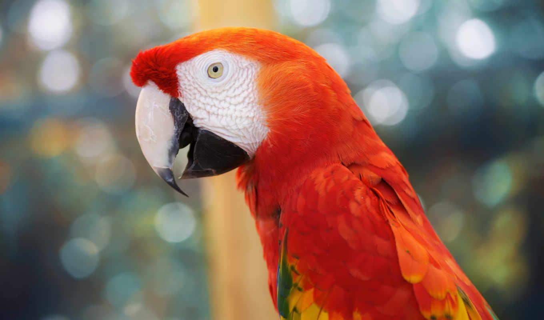 попугай, птица, preview, birds, птиц, parrots, попугаев, flying, ipad, feathers,