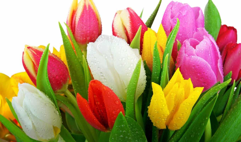 more, цветы, flowers, весна,