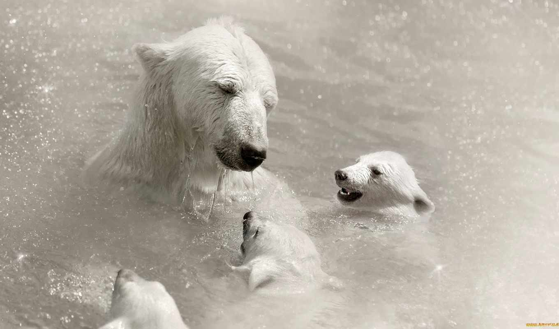 polar, bears, медведи, zhivotnye, animals, медведь, молодой, забота, полярные, морда,
