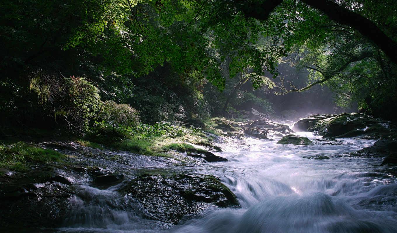 река, камни, природа, поток, деревья, картинка, лес, туман,