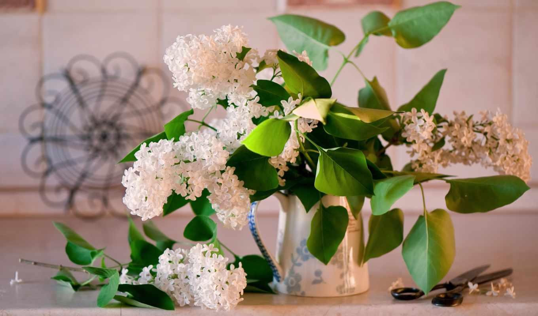 сиреневый, цветы, картинка,