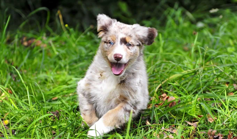 zhivotnye, собака, щенок, поделись, собаки, картинкой, друзьями,