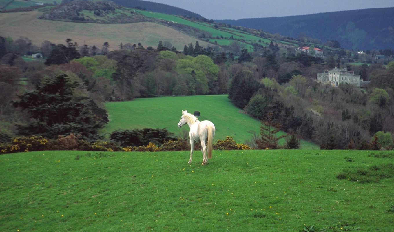 ireland, зелёный, hills, ирландский, ирландии, valniko,