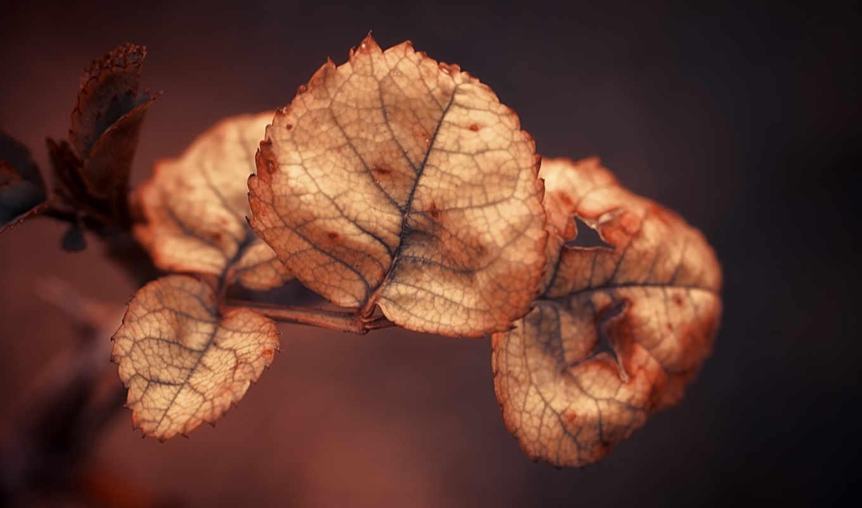 листья, dry, осень, природа, листья,
