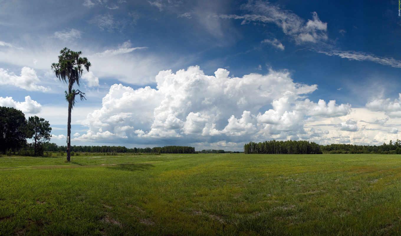 небо, красивое, дерево, старое,