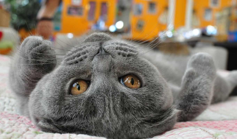 кот, cats, animals, animal, lovely, cute, mobile, тег, спина,