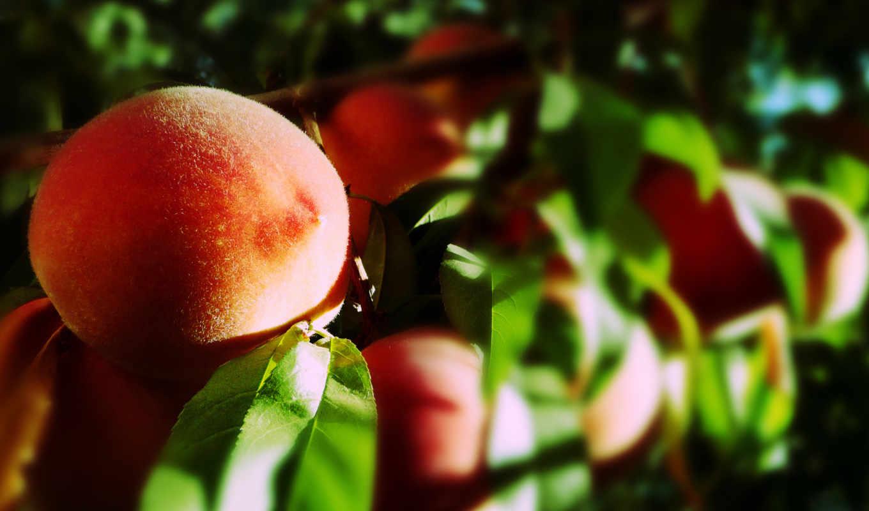 персики, фрукты, листья,