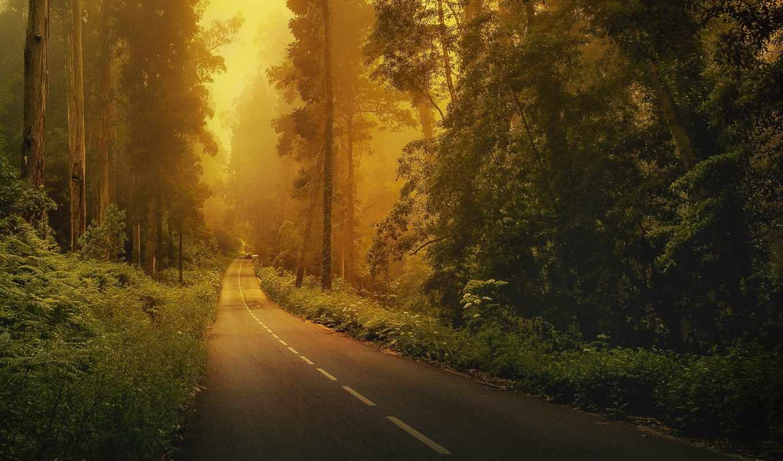 дорога, les, лесу, priroda, деревя,